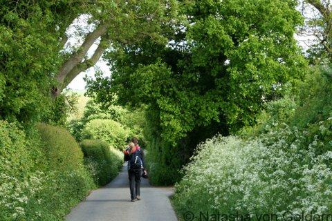 Shropshire lane in England