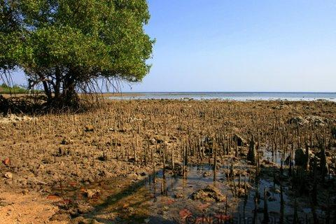 Mangroves in West Bali National Park