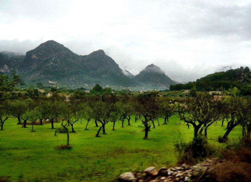 Rural Mallorca from the Tren de Soller