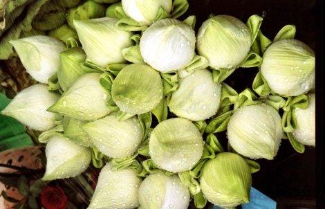 Lotus buds in Bangkok, Thailand