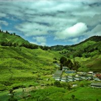 Wandering in Cameron Highlands, Malaysia