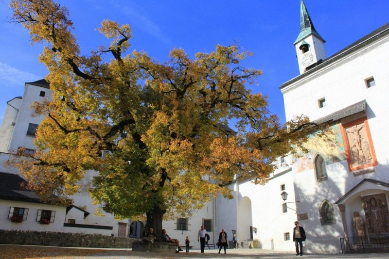 Hohensalzburg lime tree courtyard