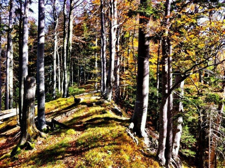 Autumn folrest colours on Gaisberg, Salzburg day out