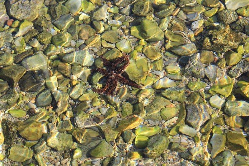Sealife in the Pakleni Islands, Croatia