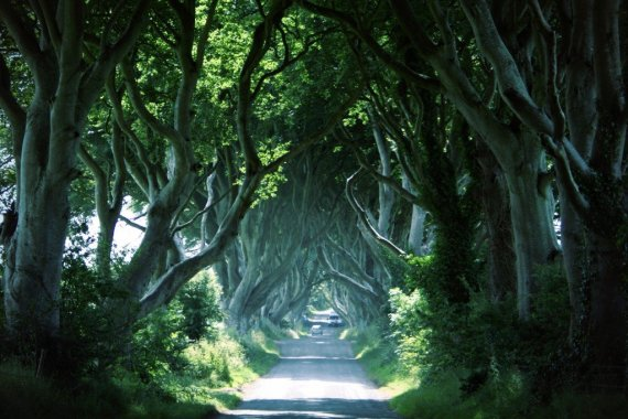 The Dark Hedges, Co Antrim Northern Ireland