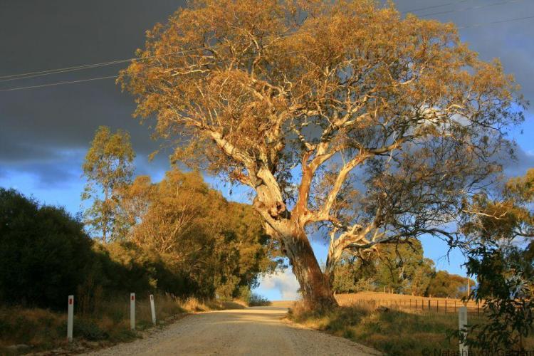 Touring the Barossa Valley, South Australia