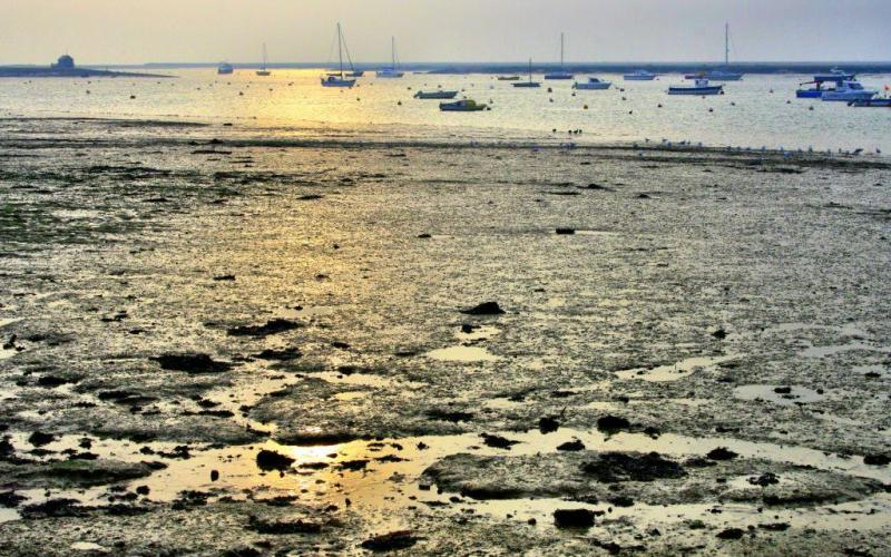 Mersea Island seascape Essex, England
