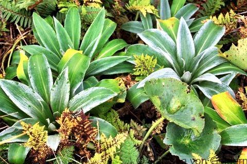 Alpine plants Milford Track, New Zealand, Photo by Natasha von Geldern