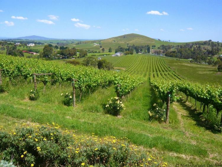 Allinda winery, Yarra Valley Australia