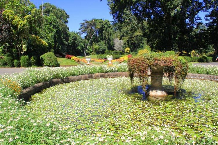 Royal Botanic Gardens Kandy Sri Lanka