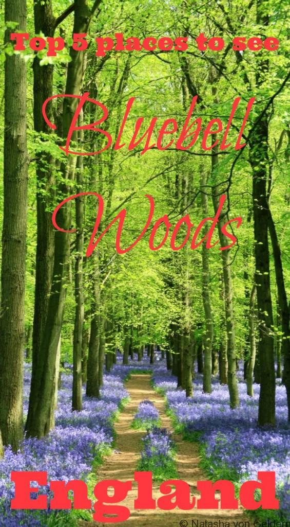 Top 5 places to see Bluebell Woods in England