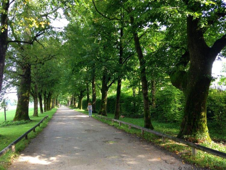 Sound of Music tree-lined road Salzburg