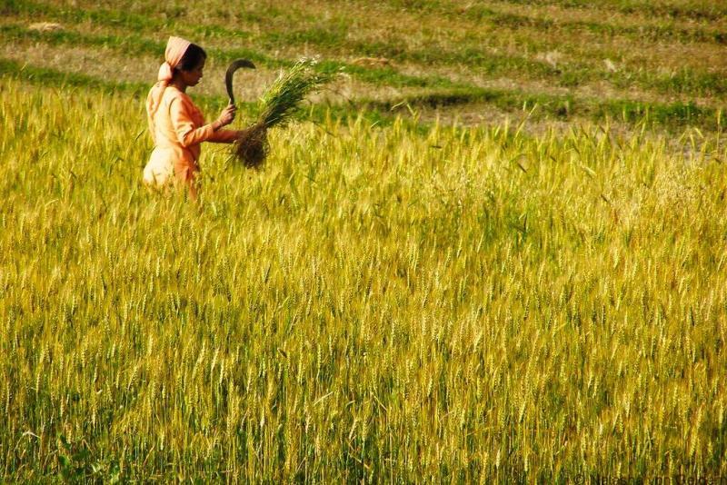 Kangra Valley scenes India