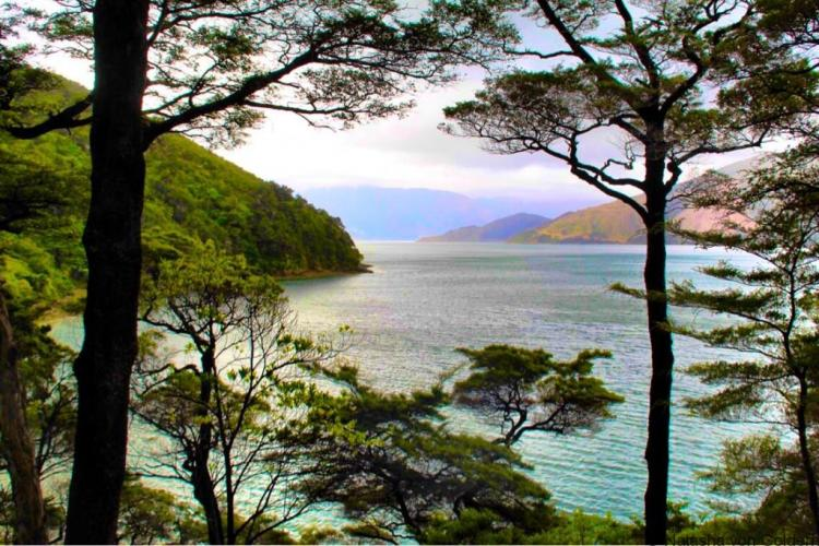 Walk at Wilsons Bay Marlborough Sounds New Zealand