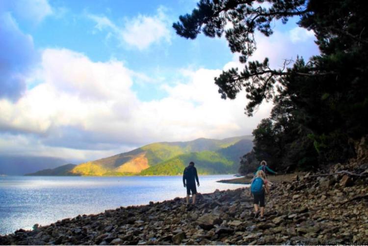 Wilsons Bay walk Pelorus Sound New Zealand