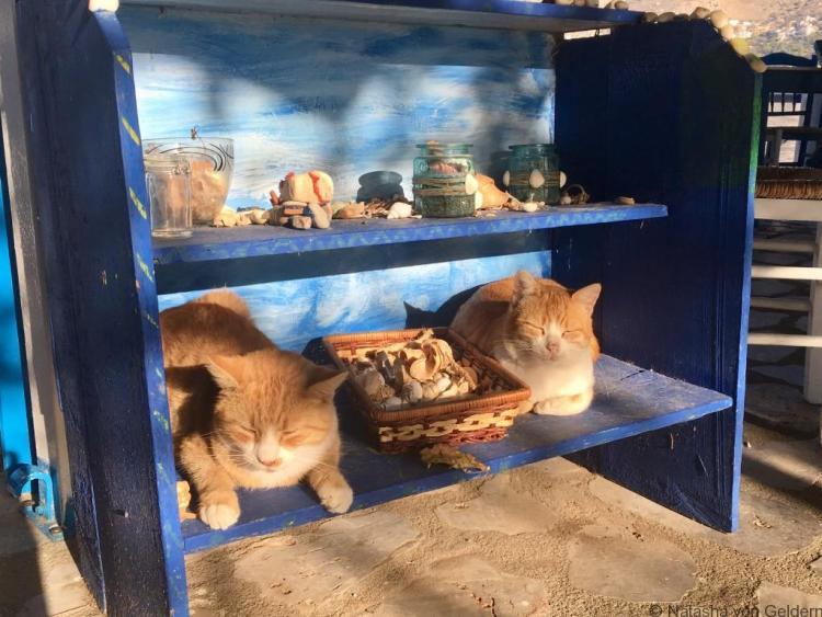 Cat security at Telendos taverna - Kalymnos holidays Greece