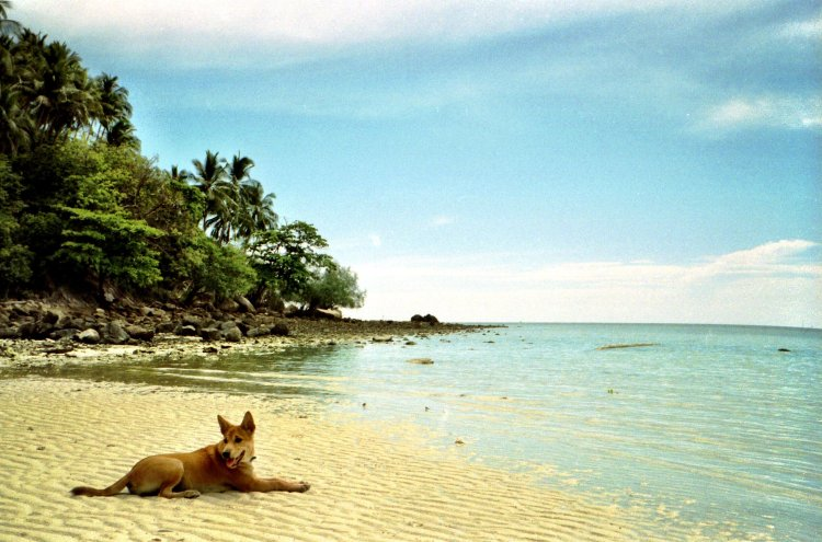 Koh Pha Ngan beach