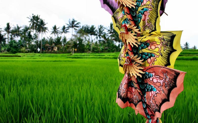 Kites and rice fields in Ubud Bali