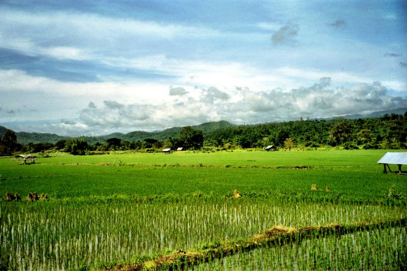 Rice fields of northern Thailand