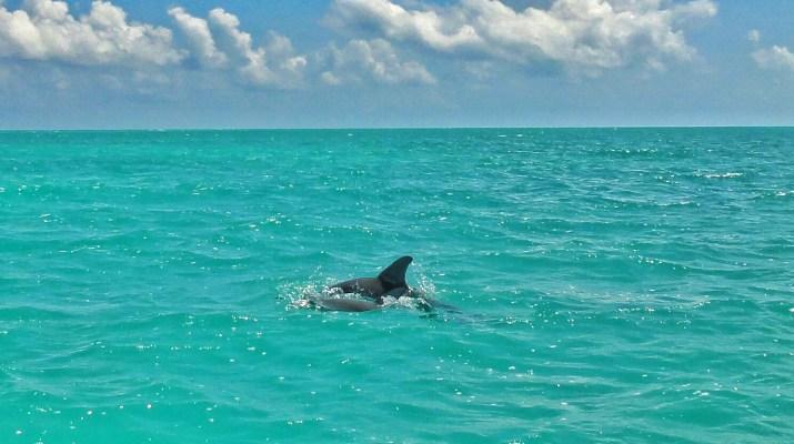 Sian Ka'an Mexico dolphins