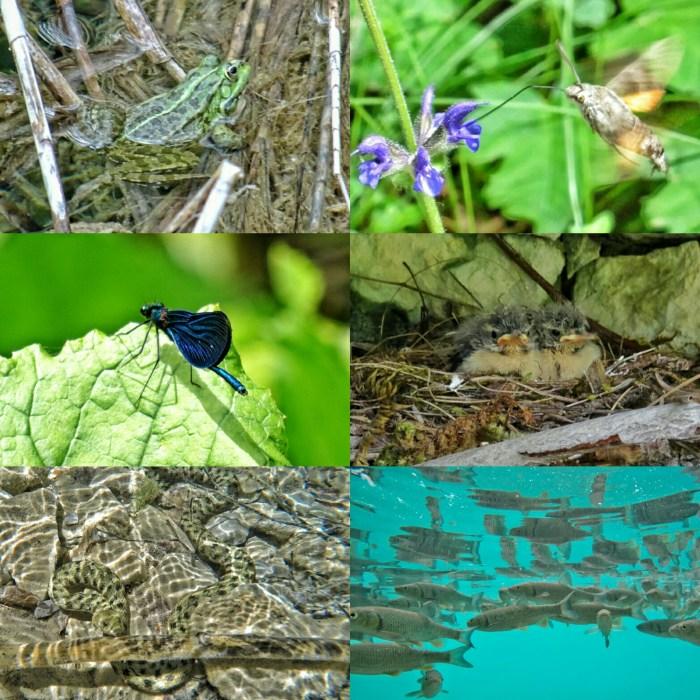 Plitvice Lakes wild life