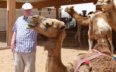 Visiting the Al Ain Camel Market