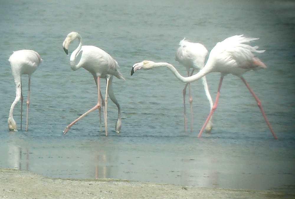 Finding Nature in the City: Dubai's Ras Al Khor Wildlife Sanctuary
