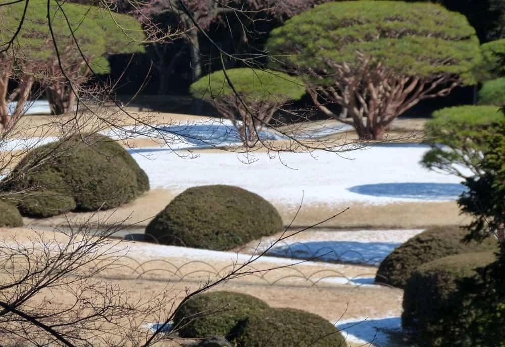 Snow at the Shinjuku National Garden