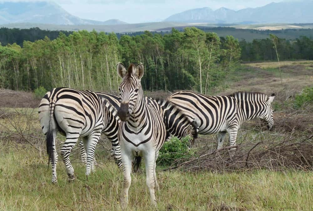 Spotting Wildlife at the Gondwana Game Reserve