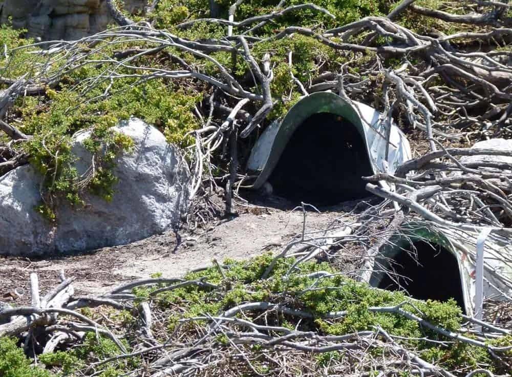 Penguin shelters at Stony Point Sanctuary