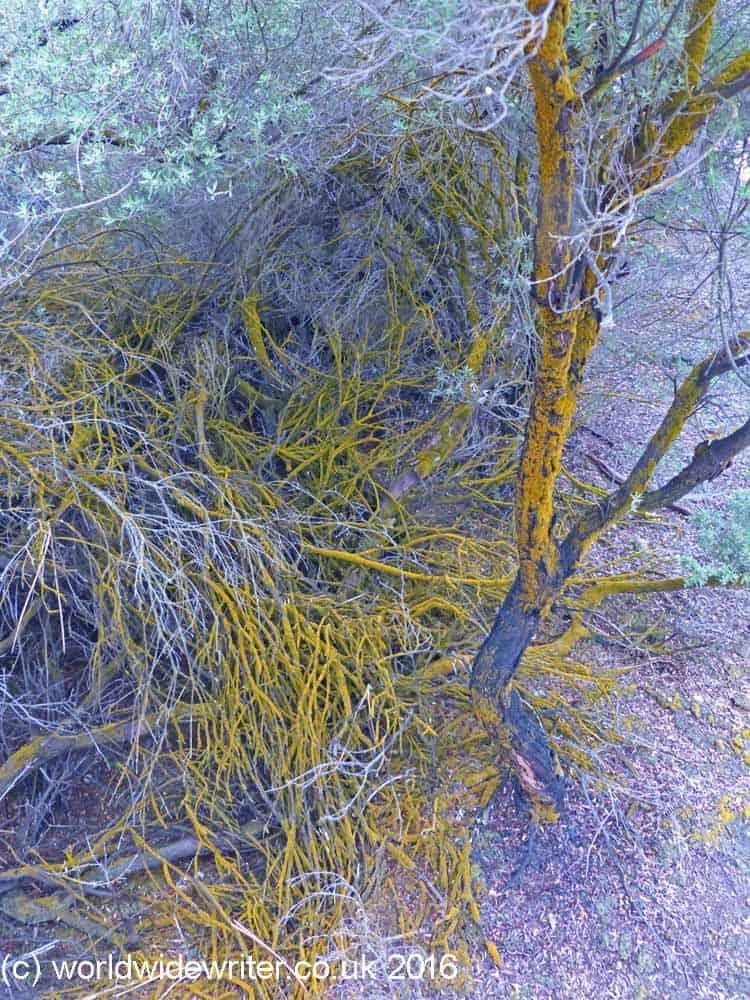 Trees at Waiotapu