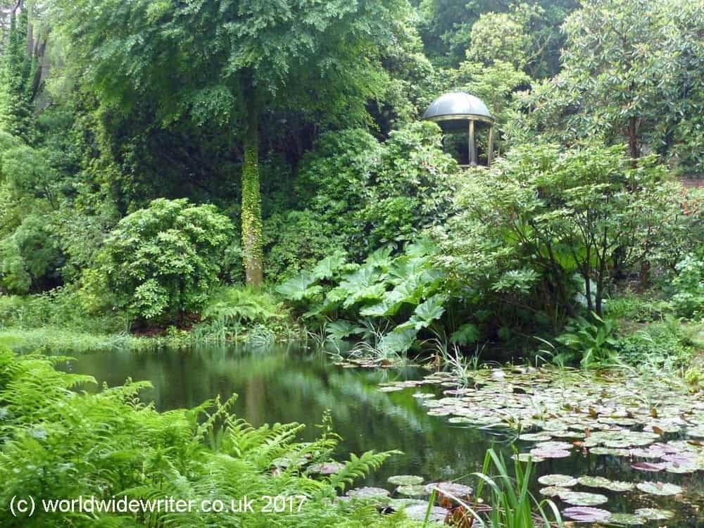 Woodland at Portmeirion