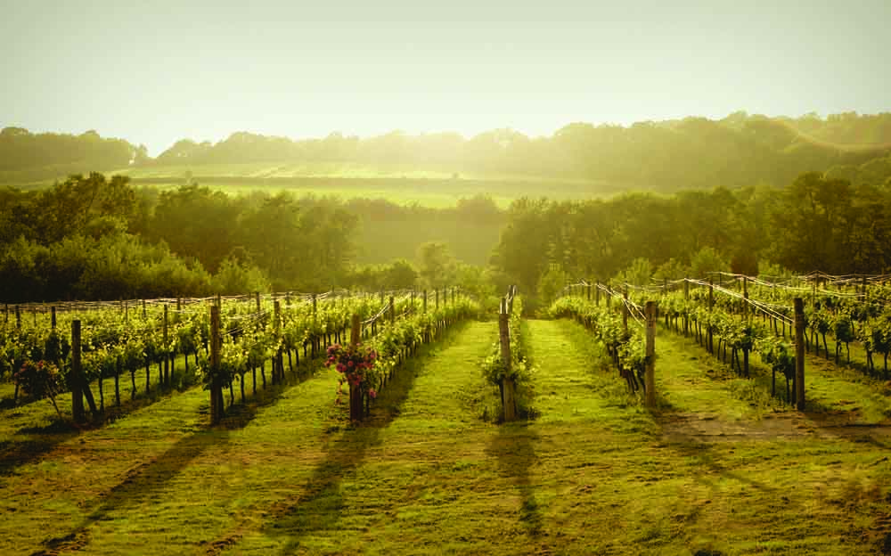 Book Review: Sparkling Wine (Vineyards of England and Wales)