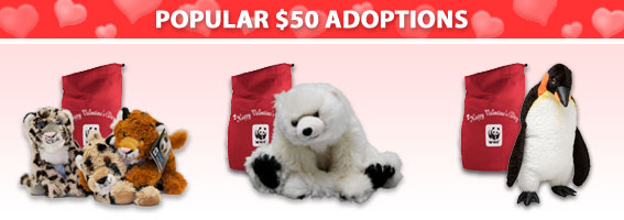 Popular $50 Adoptions