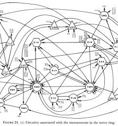 nervou system diagram full neorn [ 1902 x 1338 Pixel ]