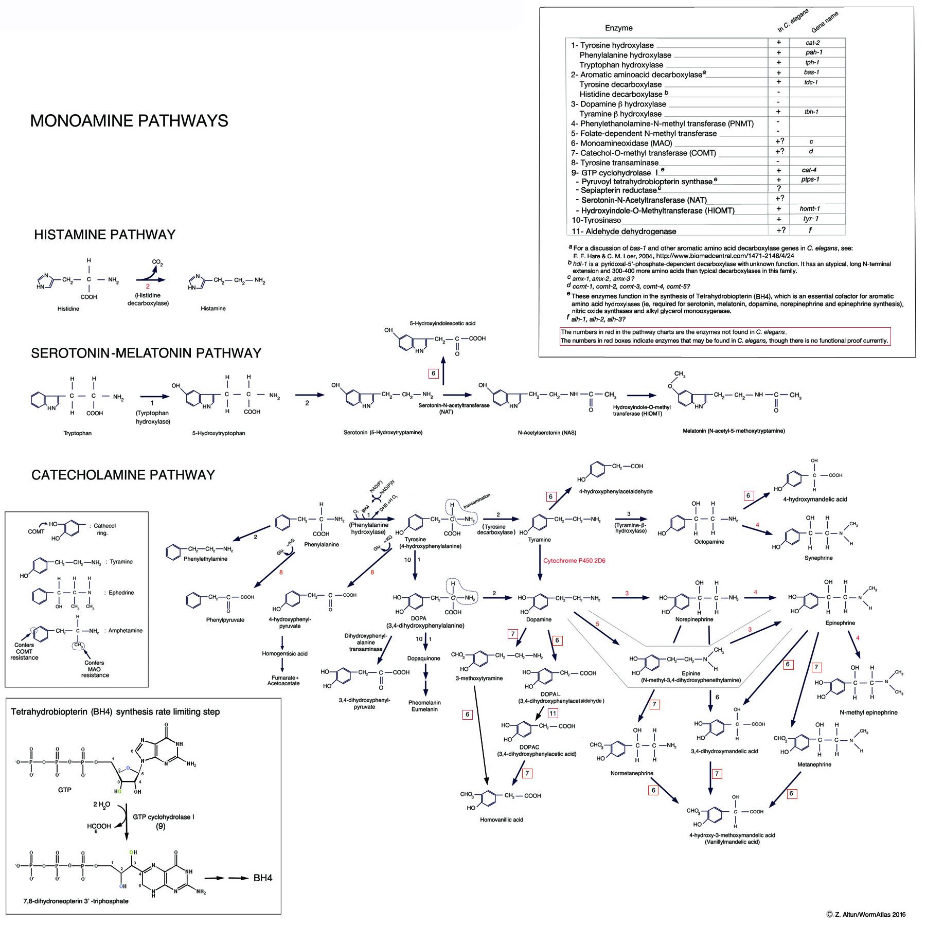 Neurotransmitters In C Elegans