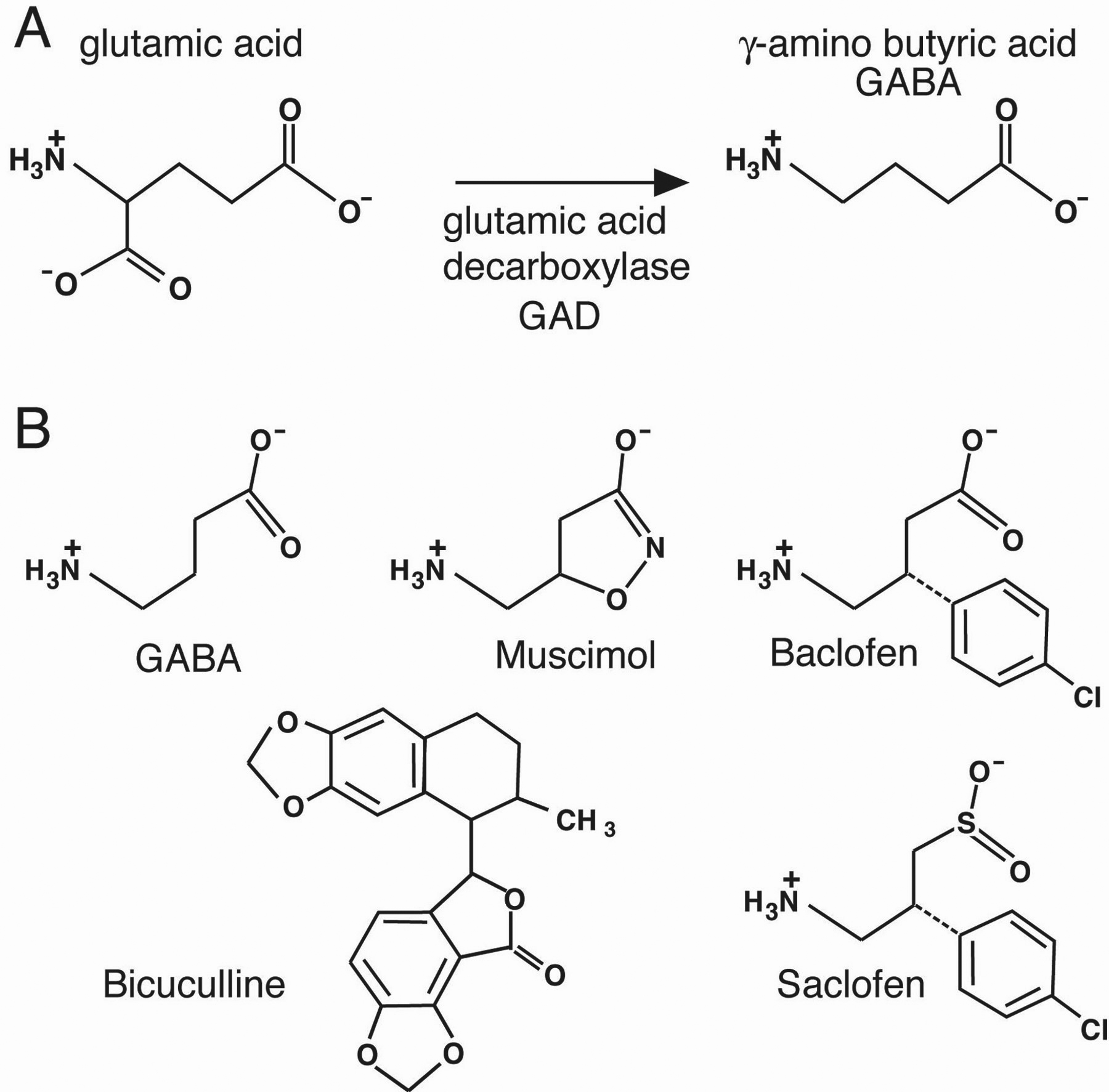 Health Applications Of Bioactive Compounds From Marine