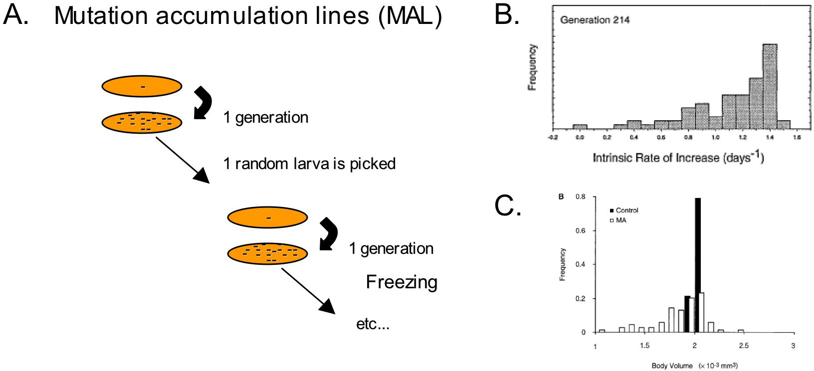 Natural variation and population genetics of