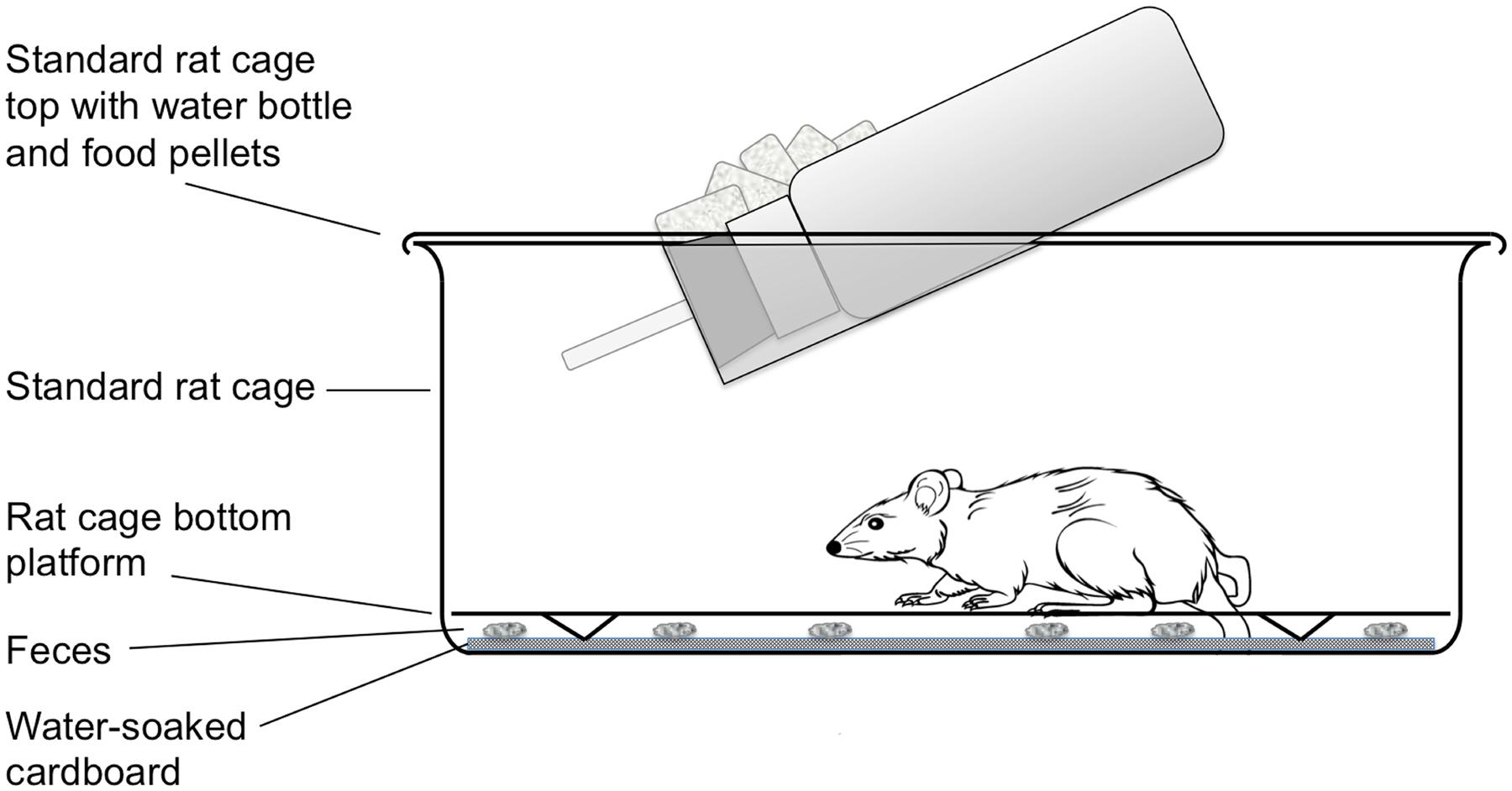 Transgenesis in animal parasitic nematodes: Strongyloides