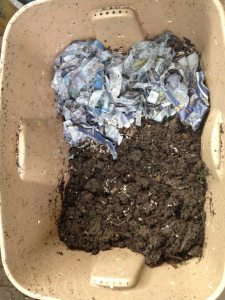 Half and Half Harvesting Method, How to Harvest Worm Compost