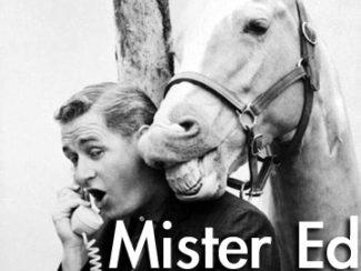 mister-ed