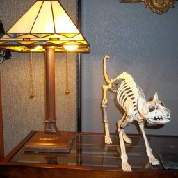 a skeleton cat model on an end table
