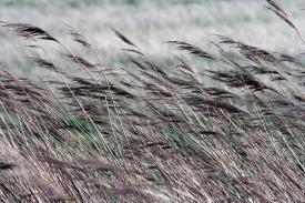 Grashalme im Wind. Foto: Björn Othlinghaus