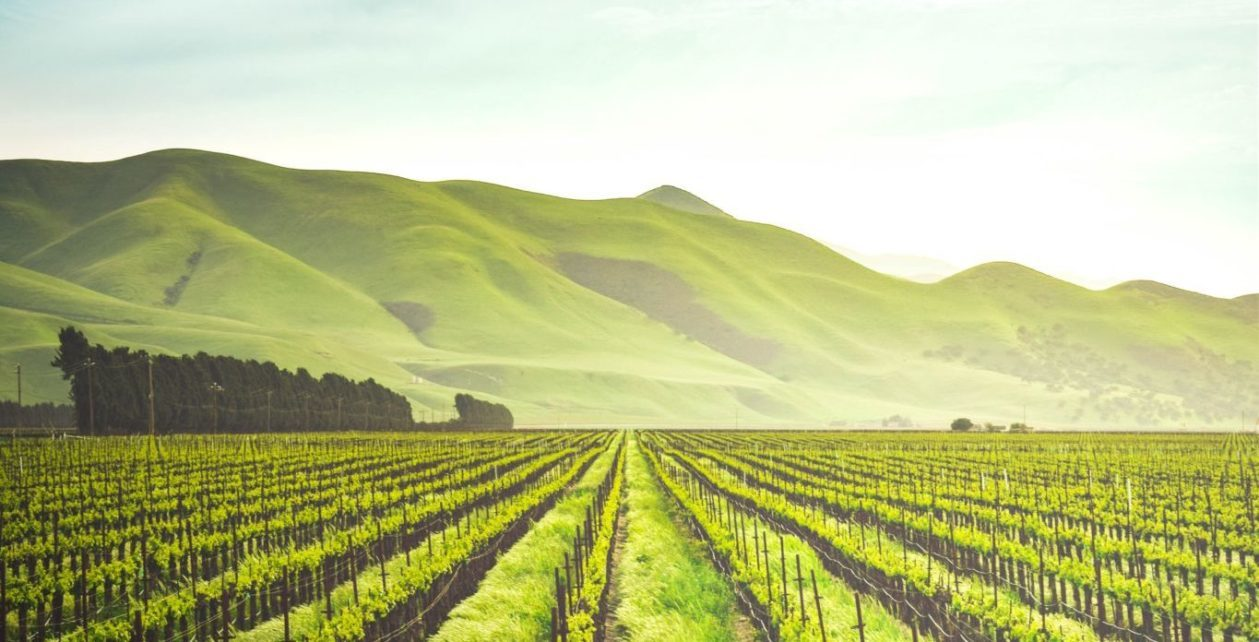 How to Make French Wine Like a Chinese Billionaire - Worth