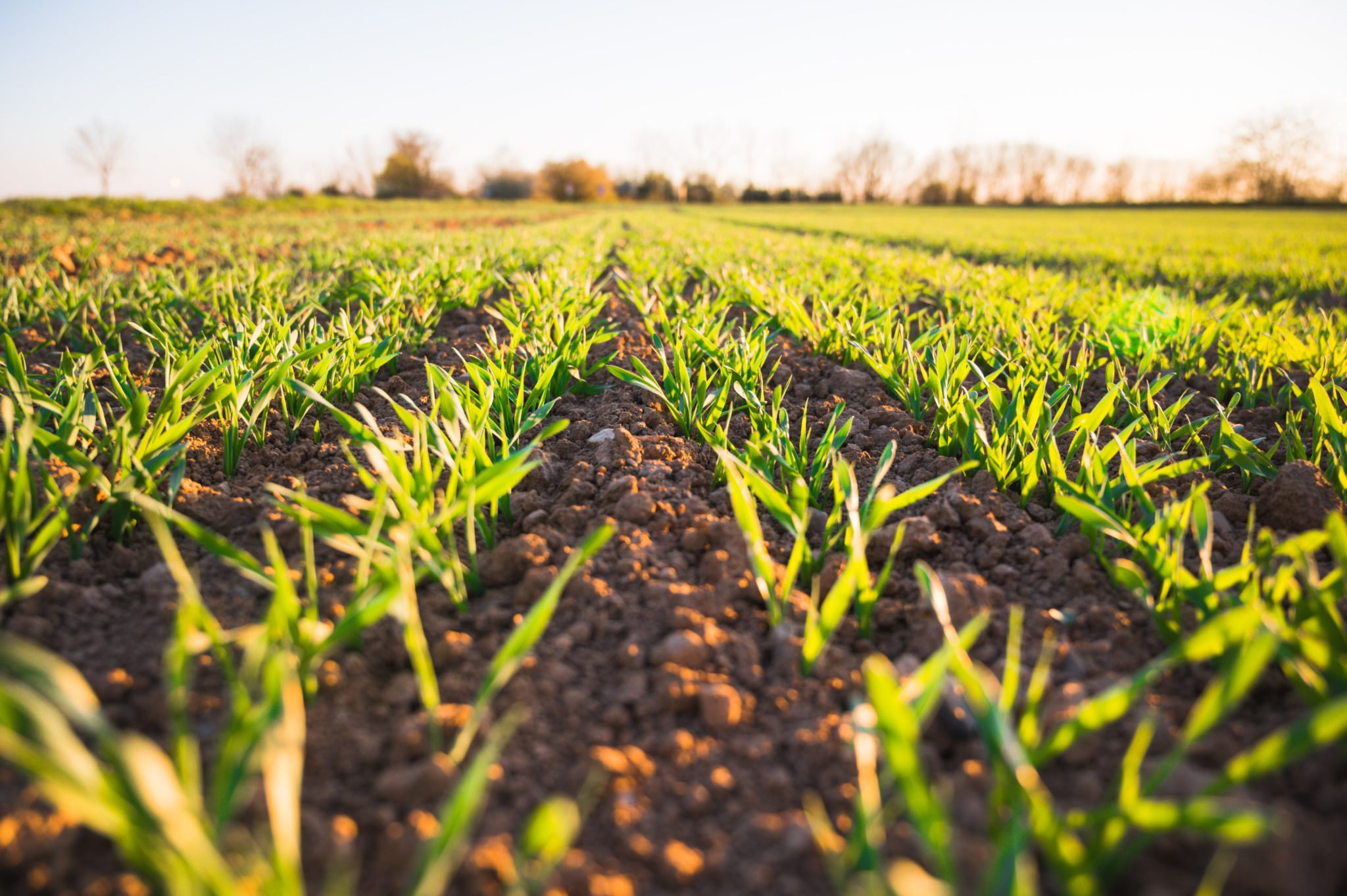 How Agriculture Technology Affects Food Consumption During Innovative Times - Worth