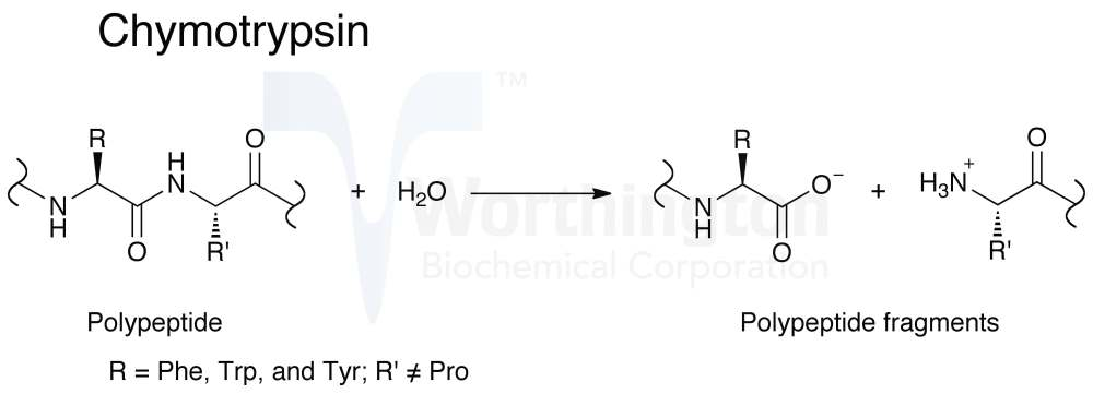 medium resolution of enzymatic