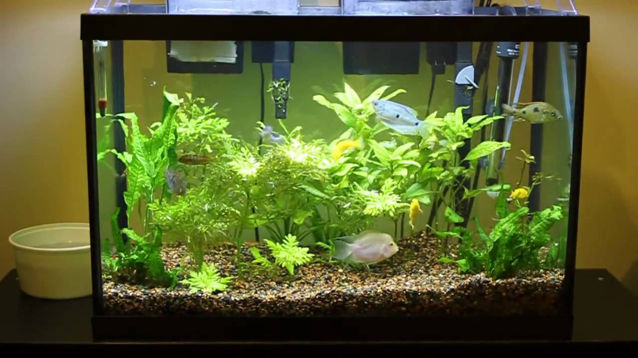 Get Your First Aquarium Up And Running With A 20 Gallon
