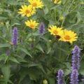 Garden Herbs and Flowers