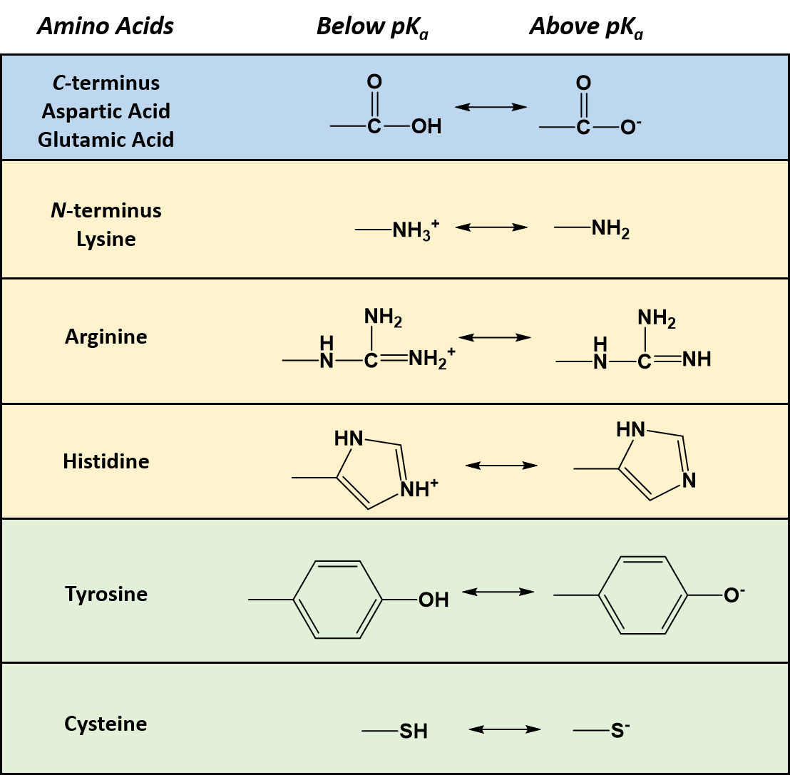Chapter 2 Protein Structure Chemistry