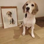 Ralph the beagle